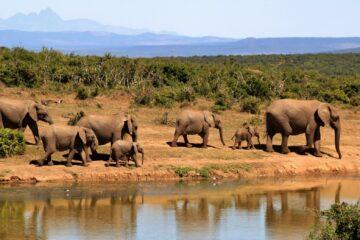 LAKE ELEPHANTS